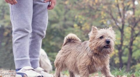 Nova teràpia amb gossos per a nens amb discapacitat