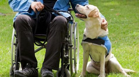 Gossos d'assistència persones amb discapacitat