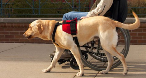 gossos assistencia discapacitat